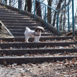 Kudowa Zdrój z psem urlop