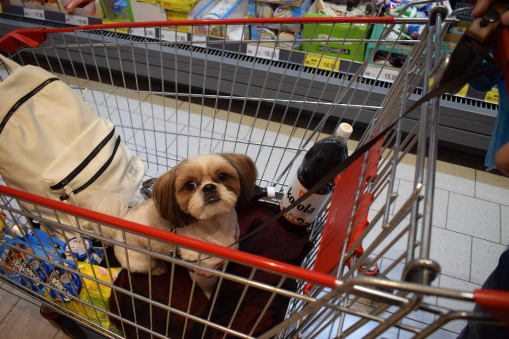 pies w supermarkecie w wózku