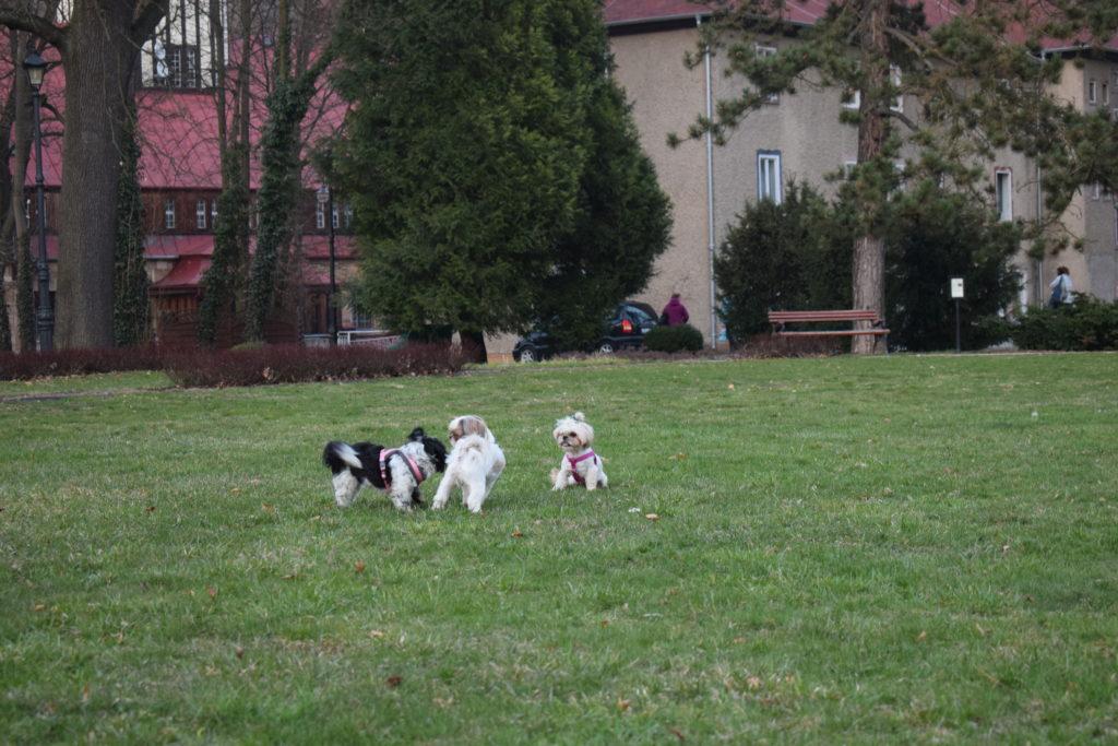 Park Zdrojowy Kudowa Zdrój z psem