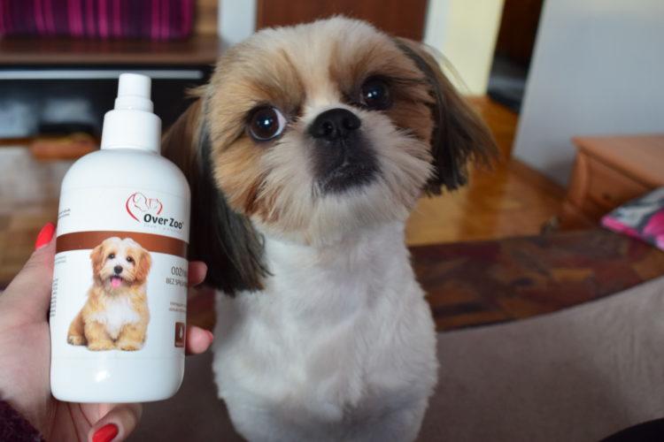 szampon dla shih tzu
