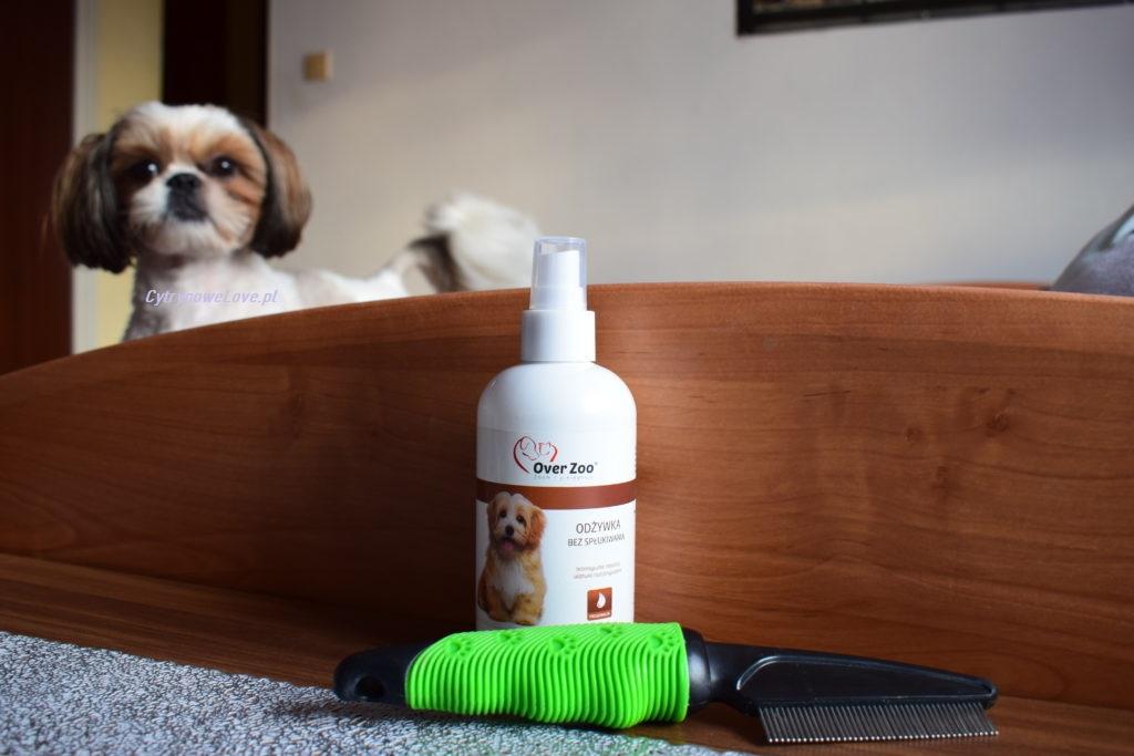 pielęgnacja psów rasy shihtzu