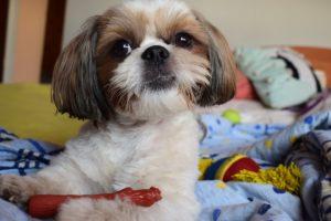 naturalne zabawki bezpieczne dla psa