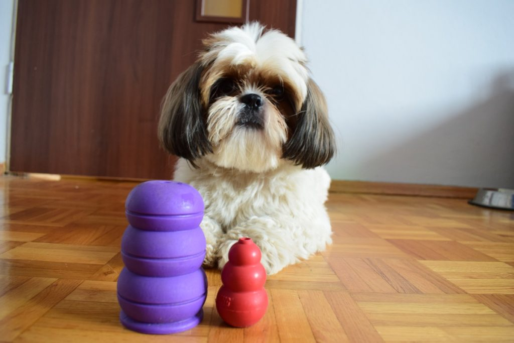 zabawka-kong-dla-psa