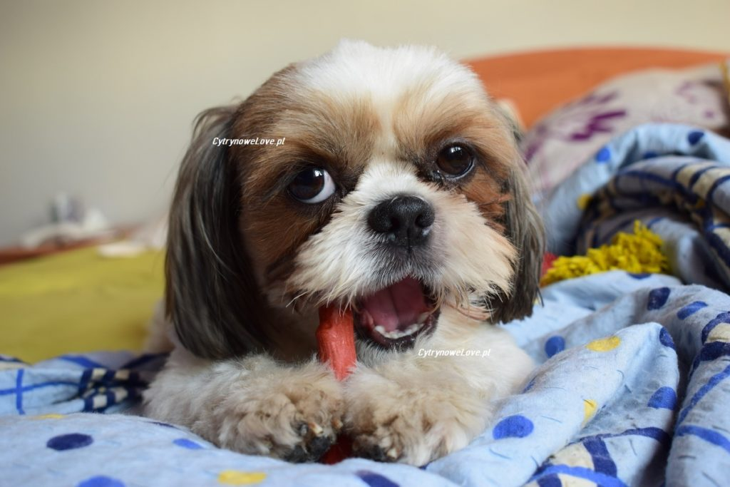najzdrowsze przekąski dla psów