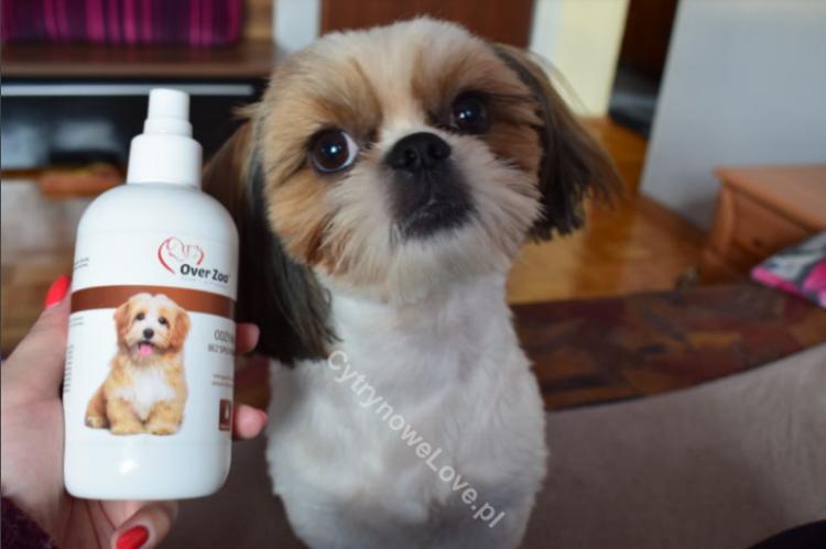 odżywka dla białych psów